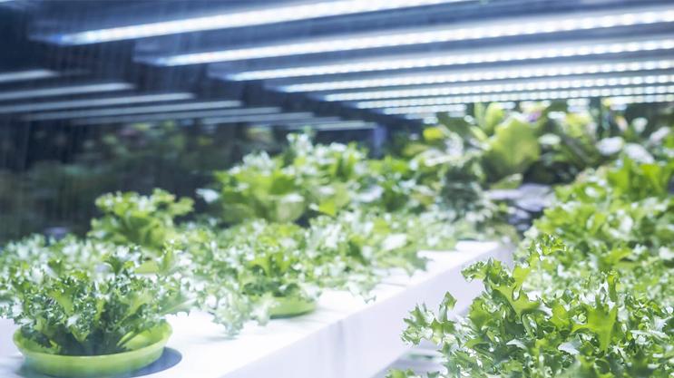 Luz blanca especial para el crecimiento de las plantas