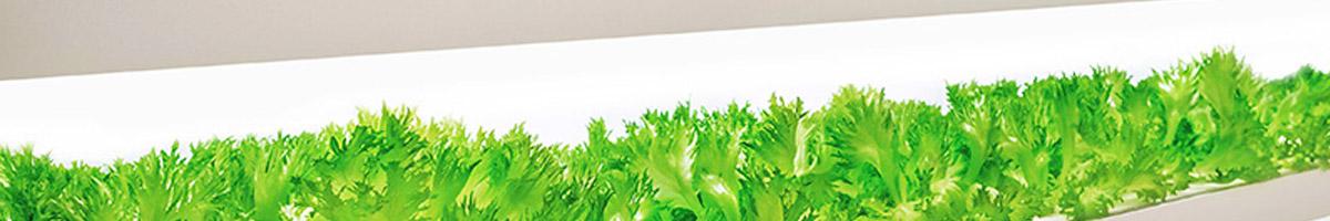Guía de iluminación para el crecimiento de las plantas (horticultura) con LEDsx